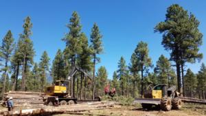 Heavy machinery thinning ponderosa pine forest in Arizona